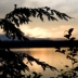 Sunset & Pine Branch, Algonquin Park, Photo Print 8' x 6'