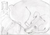 Original Pencil Drawing of your Pet