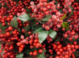 Red berries for centerpiece inspiration