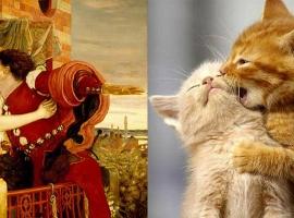 romeo-cat