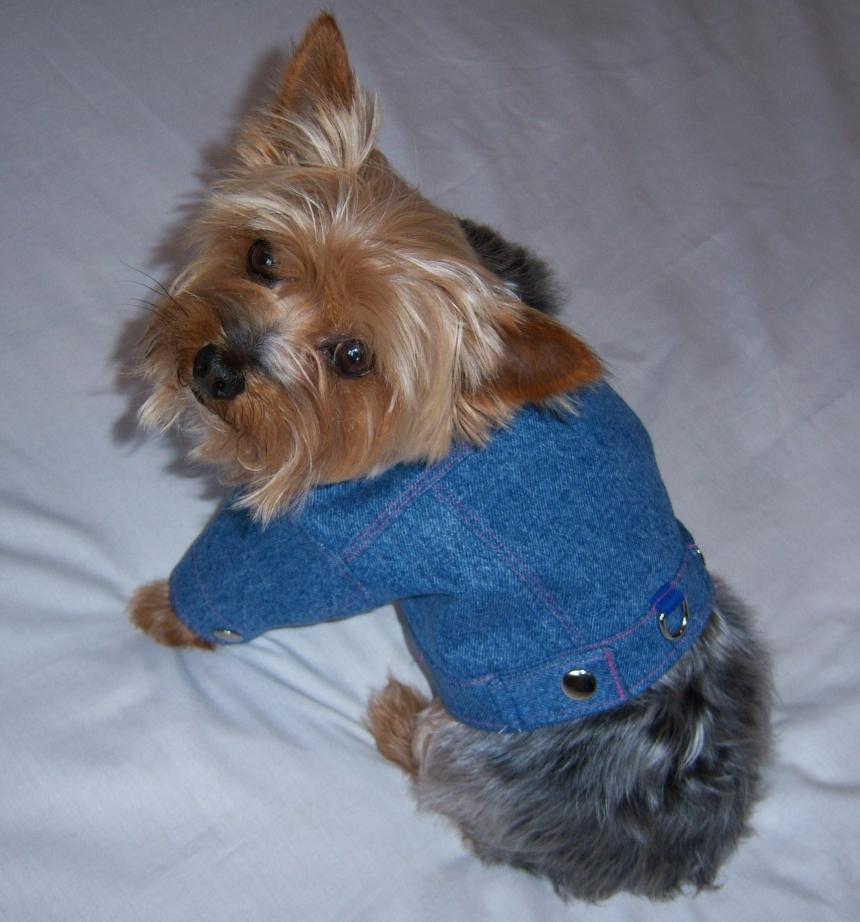 Dog Pet Denim Jacket Coat Sizes Xxsmall Small By Furkid