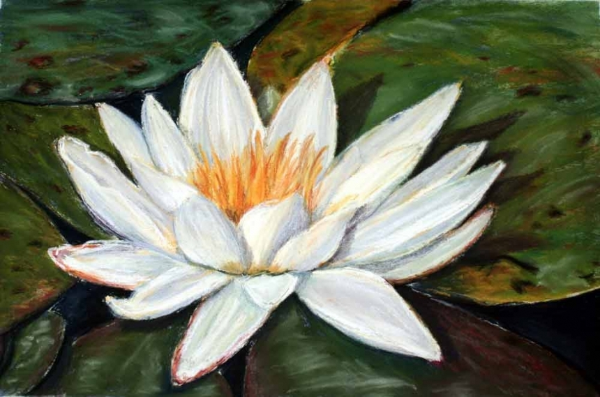 Water Lily Original Small Pastel Flower Painting By