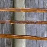 Tobacco Walking Sticks