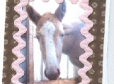 Baby Fily, Horse Lover's Note Card.  Blank.  Meet My Baby!