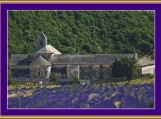 Lavender Field Cross Stitch Pattern