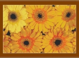 Orange Gerberas Cross Stitch Pattern