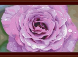Pretty Pink Rose Cross Stitch Pattern