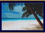 Tropical Paradise Cross Stitch Pattern