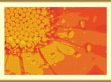 Water Drops Of Flower Cross Stitch Pattern