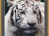 White Tiger Cross Stitch Pattern
