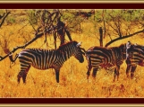 Zebras Cross Stitch Pattern