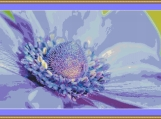 Anemone Cross Stitch Pattern