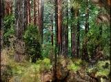 Forest Fantasy Printable Junk Journal Kit