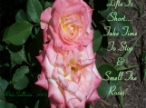 Pink Roses Photo - Life Is Short - 11 x 14 Printable