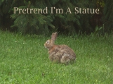 Rabbit - Pretend I'm A Statue - 8 x 10 Printable