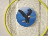 Dream Catcher 9 inch with flying Eagle
