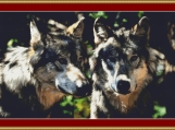 A Pair Of Grey Wolves Cross Stitch Pattern