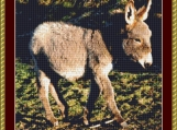 Baby Donkey Cross Stitch Pattern