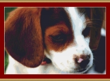 Beagle Puppy Cross Stitch Pattern