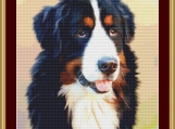 Bernese Mountain Dog Cross Stitch Pattern
