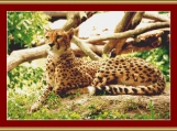 Cheetah Cross Stitch Pattern
