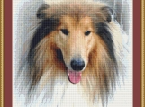 Collie Cross Stitch Pattern