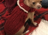 Extra Small Turtleneck  Holiday Sweater Red with White Trim
