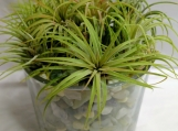 Large airplant container garden