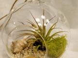 Small airplant hanging terrarium - Beach