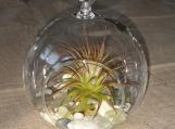 Small airplant orb hanging terrarium