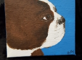 Brown BostonTerrier