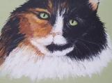 Green Eyed Fluffy Cat