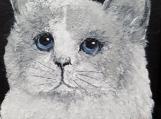 Masked Grey & White Cat