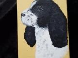 Springer Spaniel, Black & white