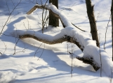 Swan Branch in Winter Forest, Canada, Photo Print 8' x 6'