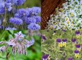 Edible Flower Seed Pack