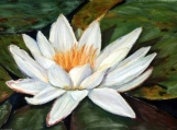 Water Lily - Original Small Pastel Flower Painting