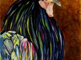 Rooster - Fine Art Giclee Reproduction 22 x 15