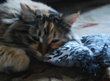Too Cute: Wild Cat Series