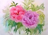 Poppies #809
