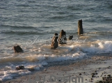 Old Pier N Tide Photo