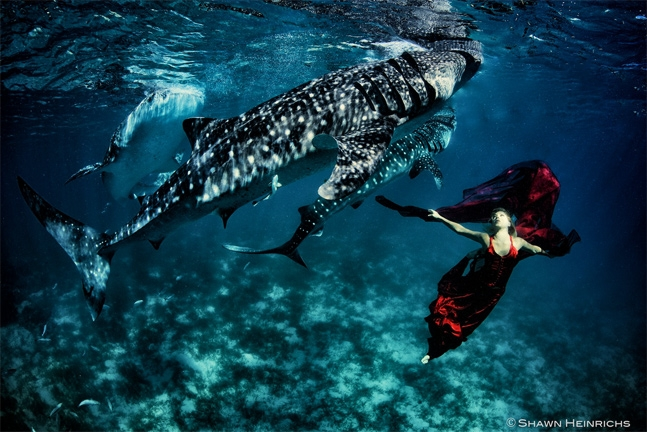 Shark fashion photography.