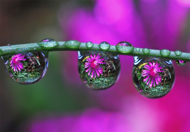 Flower and water drops.