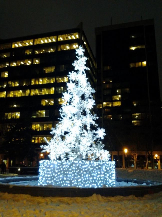 the Snowflake Tree in Berczy Park, Toronto