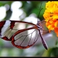ButterflyReflections